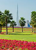 Palm trees and flowers, Dubai, United Arab Emirates
