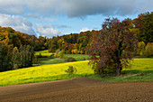 Landscape with fields and autumn forest, near Emmendingen, Black Forest, Baden-Württemberg, Germany