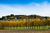 View of the Giersberg, autumn, Kirchzarten, Freiburg im Breisgau, Dreisamtal, Black Forest, Baden-Württemberg, Germany