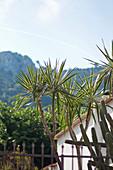 Garten mit Yucca-Baum und Kakteen in Capri, Italien