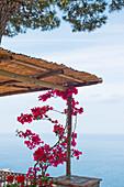 Bougainville auf einer Terrasse mit Blick auf das Meer in Capri, Italien