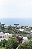 Landschaft mit Häusern in Capri, Italien