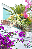 Clos-up of Bougainville and plants in Capri, Italy