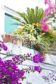 Nahaufnahme von Bougainvillea und Blumenkasten in Capri, Italien