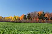 Herbstliche Landschaft, Quebec, Kanada