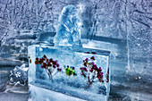 Frozen flowers and ice sculpture in the Ice Palace on Jungfraujoch, Valais, Switzerland