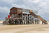 Herring gull, stilt house, north beach, St. Peter-Ording, Schleswig-Holstein, Germany
