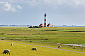 Sheep (Ovis), Westerheversand lighthouse, Wadden Sea National Park, Schleswig-Holstein, Germany