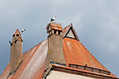 White stork (Ciconia ciconia) in the nest on the roof in Dinkelsbühl, Middle Franconia, Bavaria, Germany