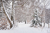 Winter hike on the Andechser Höhenweg, Andechs, Upper Bavaria, Bavaria, Germany