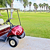 Golf buggy with palm trees on golf course.