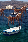 OIA, THE SQUID ON SHOW FLOATS ON THE WATER BEFORE BEING PREPARED AS PART OF THE TRADITIONAL CUISINE, SANTORINI, GREEK ISLE, TYPICAL AND ROMANTIC HIKE, GREECE