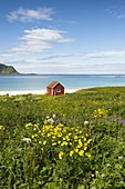 Colorful flowers and typical house on the waterfront, Ramberg, Lofoten Islands, Norway, Europe