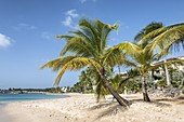 Palm trees and turquoise, Barbados Island, Lesser Antilles, West Indies, Caribbean region