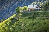 Höttinger Alm with its alpine pastures, Nordkette, Karwendel Natural Park, Innsbruck, Tyrol, Austria, Europe