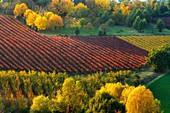 Castelvetro di Modena, Emilia Romagna, Italy. Autumn landscape with colorful vineyards and hills.