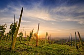 "Sunset on the village of Coazzolo from the colorful pastels vineyard ""vigna dei pastelli"", piedmont, italy"