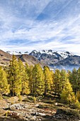 Walking up to Mount Zerbion: the Monte Rosa Massif (Antagnod, Ayas Valley, Aosta province, Aosta Valley, Italy, Europe)