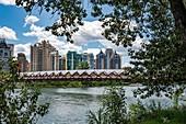 Canada, Alberta, Calgary: skyline from the Peace Bridge