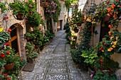 Spello, Perugia province, Umbria, Italy, Europe