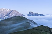 Cows grazing at feet of Cime di Terrarossa, Molignon and Palacia in the mist, Seiser Alm, Dolomites, South Tyrol, Italy
