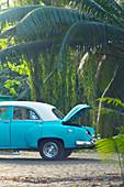 Classic car in a tropical environment in Havana, Cuba