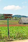 Wooden street sign in a crop field in Viñales Valley, Cuba
