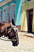 Horses head on the medieval streets of Trinidad, Cuba