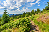 View of the Dreisesselberg in the Bavarian Forest, Bavaria, Germany