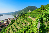 Vineyards on the Tausendimerberg near Spitz an der Donau with a view of the Danube Valley, Wachau, Lower Austria, Austria