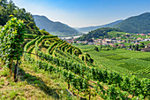 Vineyards near Spitz an der Donau, Wachau, Lower Austria, Austria