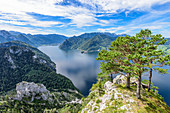 Pine trees on the Traunstein and view of the Traunsee in the Salzkammergut, Upper Austria, Austria