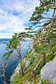 Pine trees and dead tree on the Traunstein and view of the Traunsee in the Salzkammergut, Upper Austria, Austria