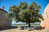 Menschen auf Bank im Schatten eines riesigen Baumes in einem Innenhof der Altstadt, Rab, Primorje-Gorski Kotar, Kroatien, Europa
