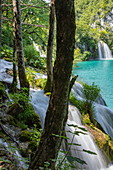 Trees and waterfalls, Plitvice Lakes National Park, Lika-Senj, Croatia, Europe
