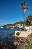 Bar and palm trees by the water, Vis, Vis, Split-Dalmatia, Croatia, Europe