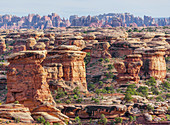 Rock formations, Chesler Park, The Needles district, Canyonlands National Park, Utah, USA