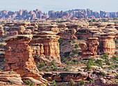 Felsformationen, Chesler Park, The Needles district, Canyonlands National Park, Utah, USA
