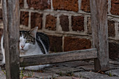 Cat under a bench in the old town of Lueneburg, Germany