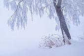 Tiefer Winter im Kochelmoos, Bayern, Deutschland, Europa