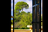 View through open window on Mediterranean trees, Mallorca, Balearic Islands, Spain, Europe