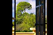 View through open window on Mediterranean trees, Mallorca, Balearic Islands, Spain, Europe
