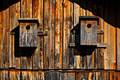 Two nest boxes, Bavaria, Germany, Europe