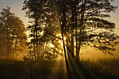 Sunlit tree in the autumn morning mist south of Regensburg, Bavaria, Germany, Europe