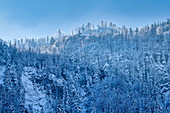 Mountain forest below the Herzogsstand covered by hoarfrost, Kochel am See, Bavaria, Germany, Europe