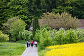 Group of hikers on road next to rapeseed field, near Leidersbach, Räuberland, Spessart-Mainland, Franconia, Bavaria, Germany
