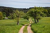 Feldweg im Frühling, Heimbuchenthal, Räuberland, Spessart-Mainland, Franken, Bayern, Deutschland