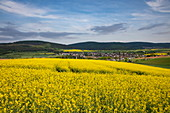 Blooming rape field with town in the distance, Eschau, Räuberland, Spessart-Mainland, Franconia, Bavaria, Germany, Europe
