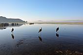 Äthiopien; Region der südlichen Nationen; Hawassa See in der Nähe von Hawassa; fischreicher See im ostafrikanischen Grabenbruch; Urlaubsgebiet mit Resorts und Hotels