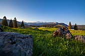 Winklmoos Alm in spring and view of the Tyrolean Alps, Tyrol, Salzburg, Chiemgau, Bavaria, Germany